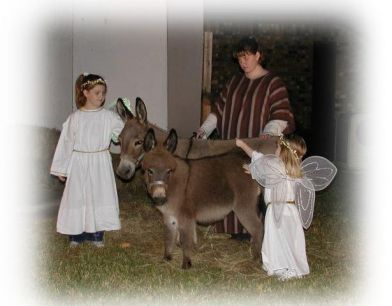 Marion's Donkeys & Angels