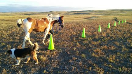 Arrow Weaving Equine Agility Cones 2015-09-22