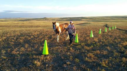 Horse Agility Cone Weaving Arrow 2015-09-22